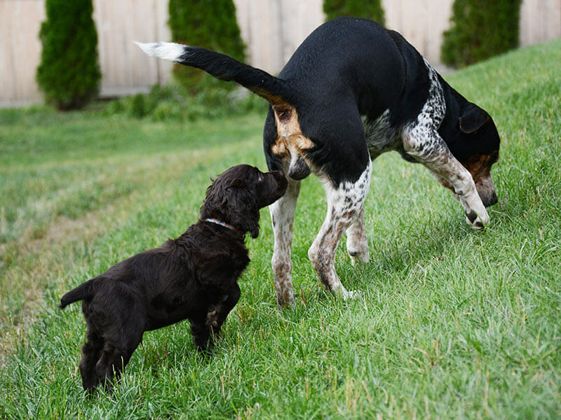 dog sniffing butt