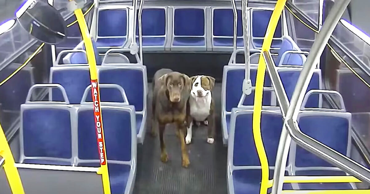 This image has an empty alt attribute; its file name is dogs-bus.jpg